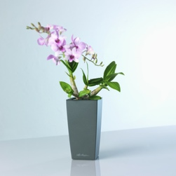 office-plants-orchid-rent